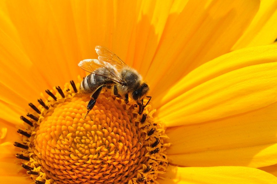 Doe mee met World Bee Day